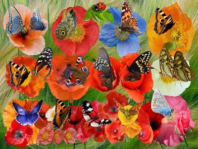 Clipart Poppies and butterflies