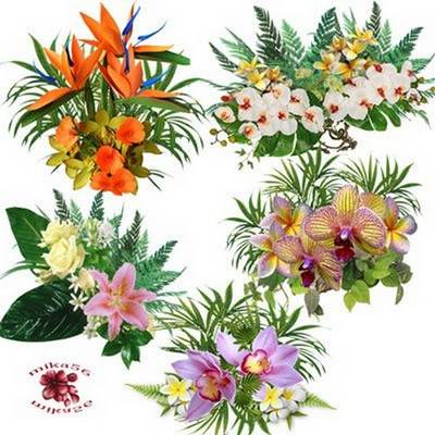 Clipart png images Exotic flowers – 11 PNG flower clusters on a transparent background