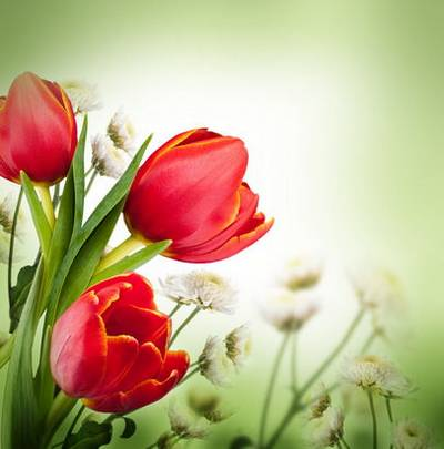Baskets of tulips - set of spring backgrounds
