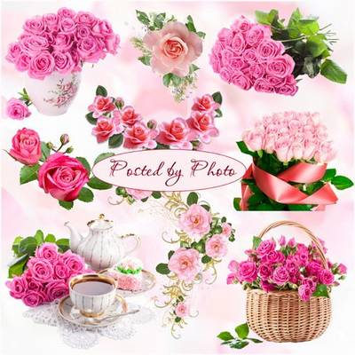 Flower clip art png images on a transparent background - 11 PNG clusters Pink roses