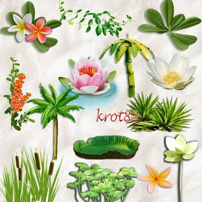 Free Maritime clipart Png - 65 png images hand drawn flowers, plants, free download from Drive.Google.com