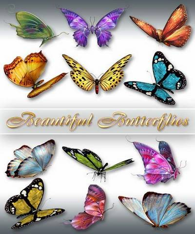 Free Butterfly clipart - 27 PNG images, max 3000x3000 px free download