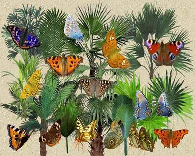 Clipart free psd Palm trees and butterflies free download