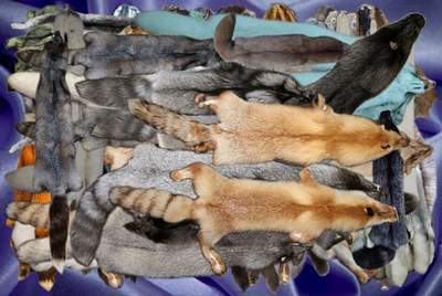 Clipart PSD Animal skins of foxes, minks and sables free download