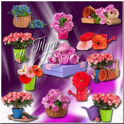 Flower Clipart PSD free download