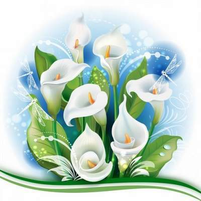 Free PSD source with Calla lilies free download