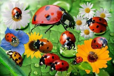 Insects Clipart psd ladybugs in the meadow free download