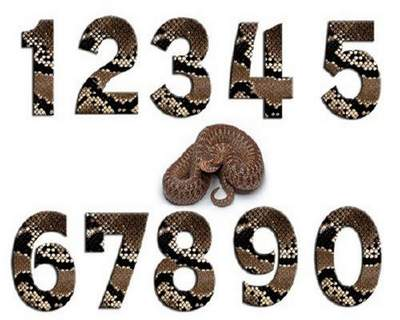 Clipart psd download - numbers snakeskin free psd file