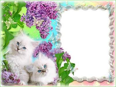 Picture frame with kittens free download - He's so cute