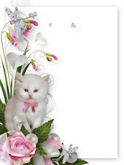 Photo frame for Photoshop download - Cheery little white kitten