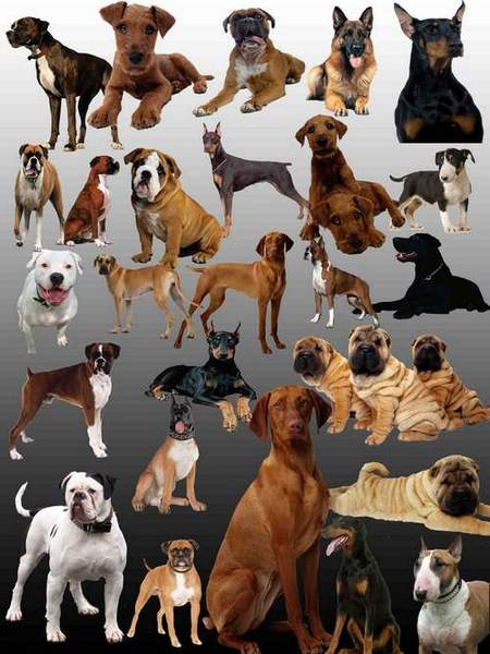 Dogs Clipart download - Different breeds of dogs free psd file