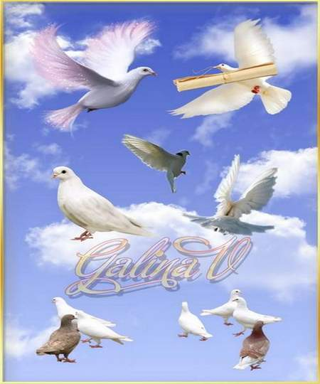 Doves Clipart download - 31 free png images on a transparent background