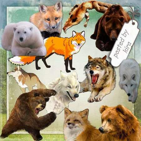 Animal clipart download - Bears, foxes and wolves 84 free png images