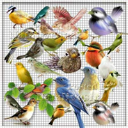 Birds png download - free 41png images (transparent background)