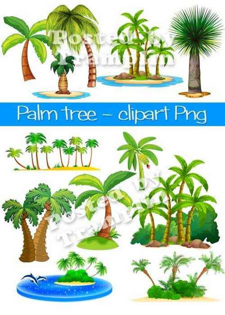 Palm trees download - free clipart 25 Png images (transparent background)