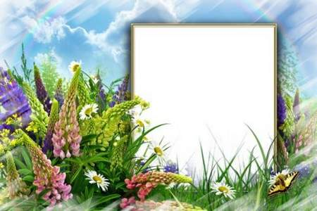 Summer frame collage download for photoshop - Eyes happy morning meadow