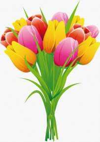 Selection Clipart Flowers png images on a transparent background - These different colors