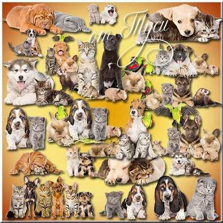 Animal clipart download - cats, kittens, dogs & puppies on a transparent background