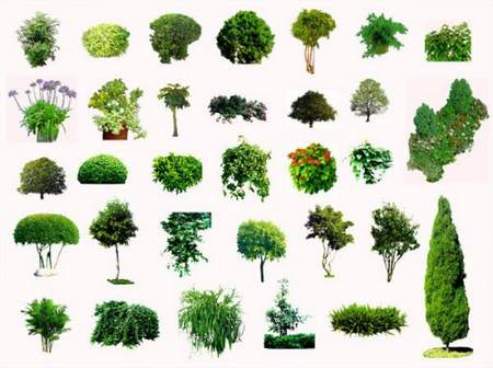 PSD trees collection download - 12 free psd (transparent background)