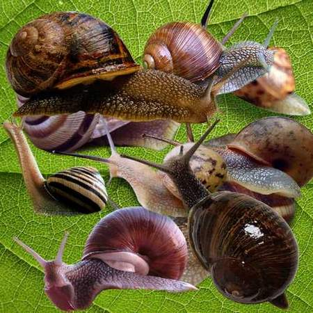 Snail on a transparent background - free psd file (10 pieces)