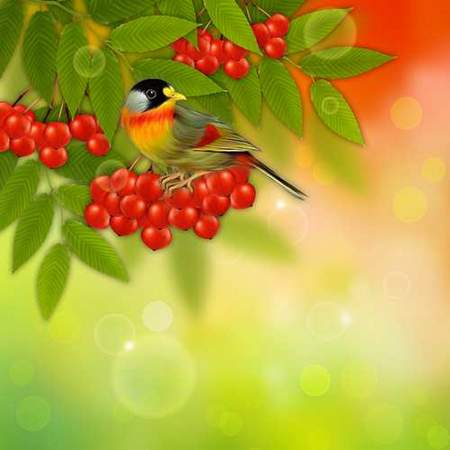 Red rowan background psd free download