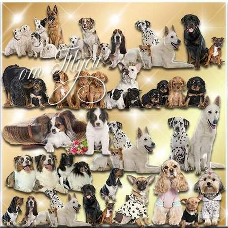 Dogs on a transparent background download - free psd file (18 layers)