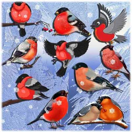 Bullfinches clipart - free 41 png images download (transparent background)