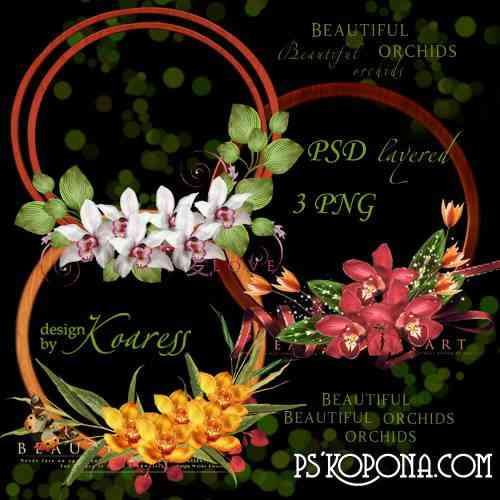 PNG clipart for Photoshop - Frames cutouts with colorful orchids
