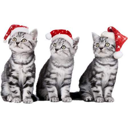 Christmas dogs and cats - free layered psd file, transparent background, free download