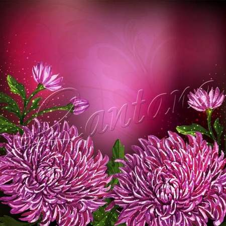 Free 2 backgrounds psd download - Purple flowers
