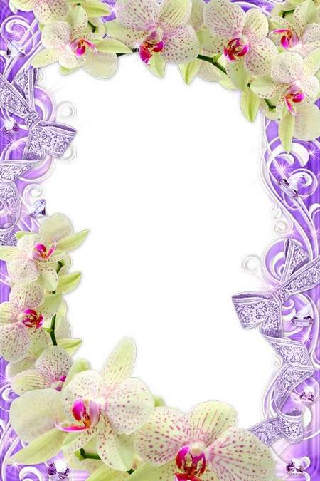 Gentle flower frame – Charming orchids
