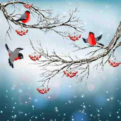 Winter PSD source with birds ( free 2 layered psd file, free download )
