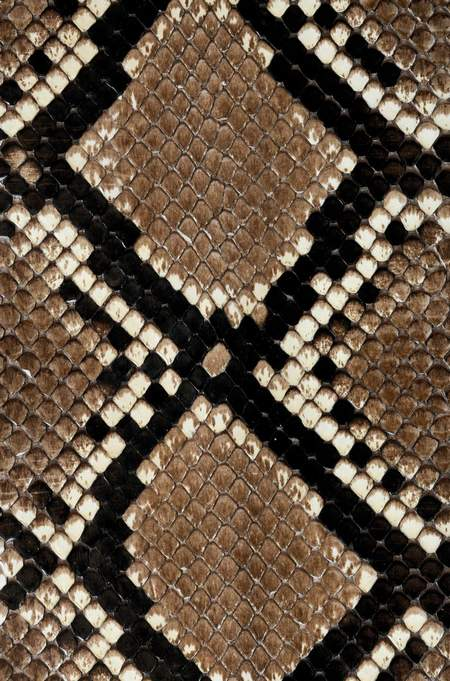 Snake skin texture ( free textures, free download )