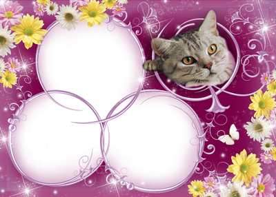 Flower photo frame for photoshop Gray cat ( free photo frame png, free download )