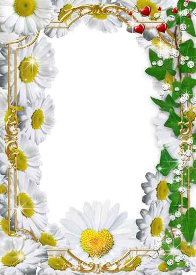 Flower photo frame for lovers with Daisies ( free photo frame psd, free download )