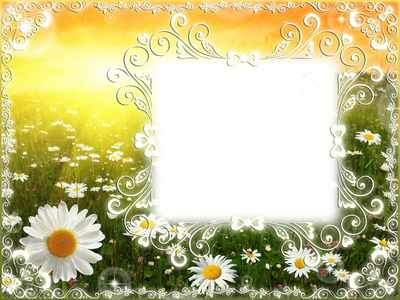 Summer photo frame psd with a chamomile field, and calligraphic flourishes