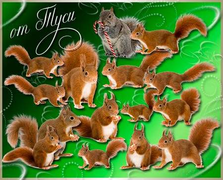 psd squirrel on a transparent background
